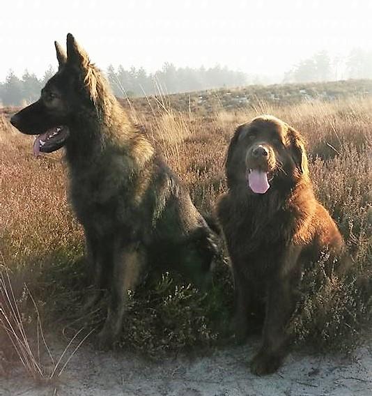 honden instructeur Saskia Aarts