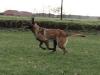 britt-rennen